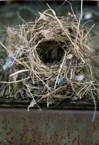 Empty Nest Photo