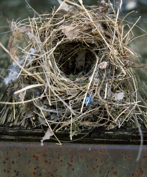 An Emptying Nest – Lots of Emotions