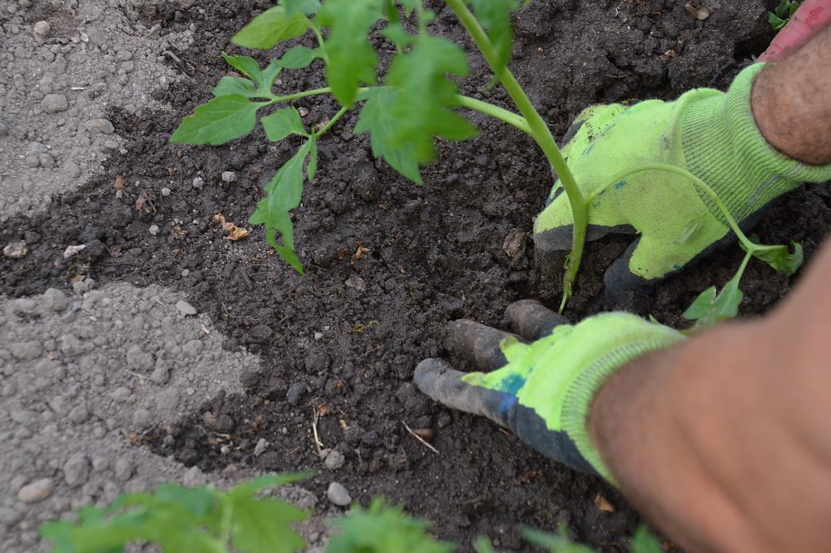 The Master Gardener