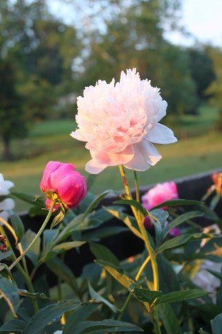 flower for blog post vision for family