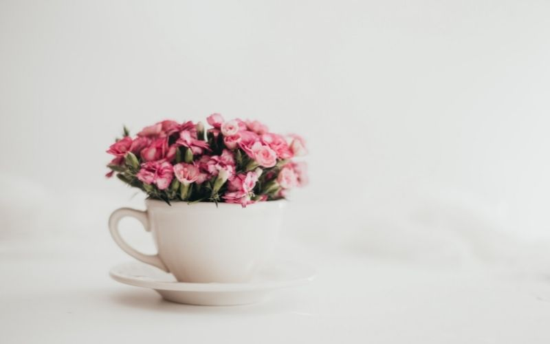 teacup full of tiny pink flowers