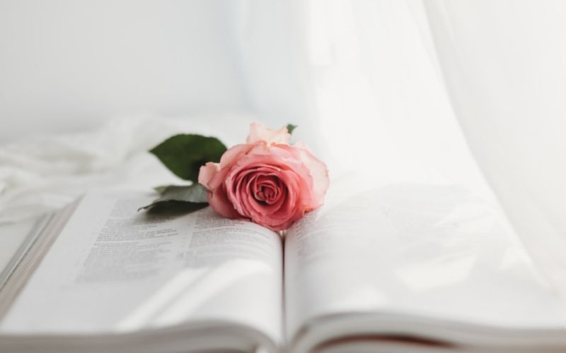 open Bible with pink rose on top, white curtains